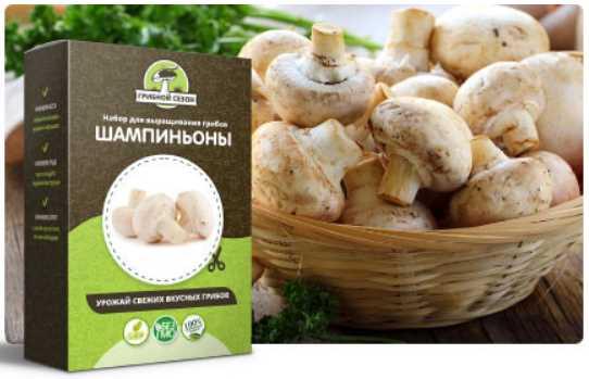 Набор для выращивания грибов в домашних условиях